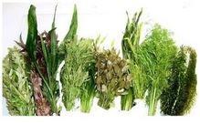 Mixed Species Live Plants