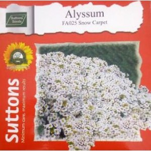 Alyssum Flower Seeds