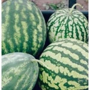 Green Striped Jumbo Watermelon Seeds