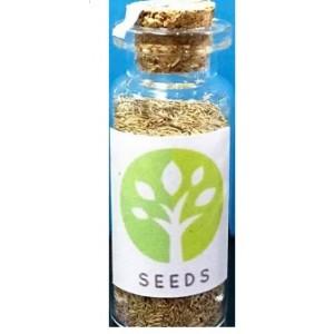 Dwarf Hairgrass Plants Dry Seeds