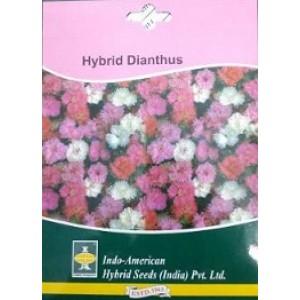 Hybrid Dianthus Flower Seeds