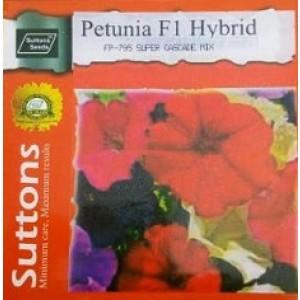 Hybrid Petunia Flower Seeds