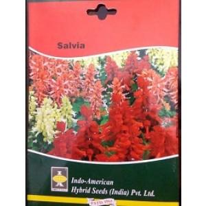 Hybrid Salvia Flower Seeds