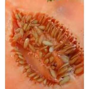 Orange Flesh Muskmelon
