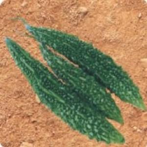 Syngenta Asmita Bittergourd Commercial Agriculture Seeds
